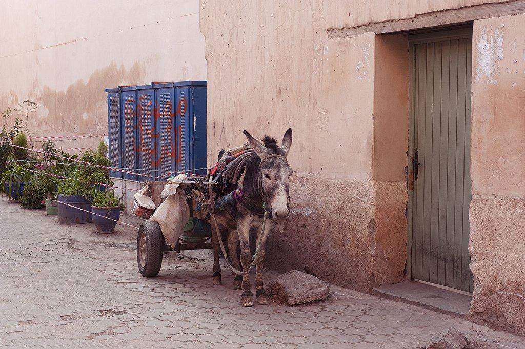 Marrakech / Marokko